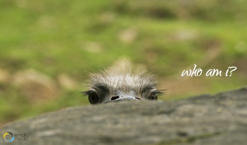 brand identity ostrich metaphor